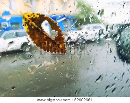 Maple Leaf On Glass With Natural Water Drops