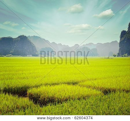 Vintage retro hipster style travel image of rice field. Tam Coc, Vietnam