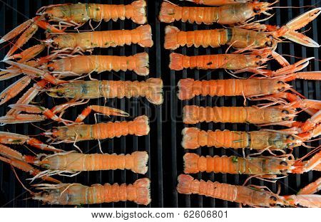 Organized grilled Scampi