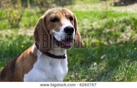 Dog On Field In Spring
