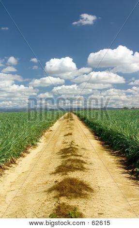 Camino de ripio australiano