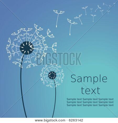 Dandelion C