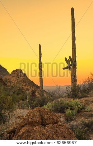 sonoran desert at dawn, hdr image