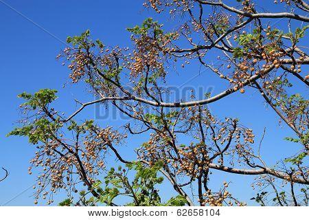 Tree's Branch
