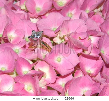 Lacecap Hydrangea And Diamond