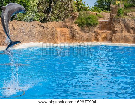 Dolphin Jumping High
