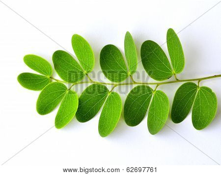 Green Leafs On Isolated White Background With Best Shape Of Artistry