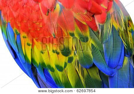 Green-winged Macaw, Red And Blue Macaw, Scarlet Macaw, Feathers