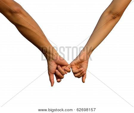 Hand In Hand In Isolated White Background