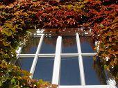 Autumn Window poster