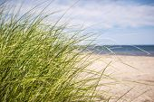 image of deserted island  - Grass growing on sandy beach at Atlantic coast of Prince Edward Island - JPG