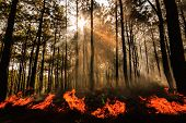 pic of deforestation  - wildfire or fire at Mae Hong sorn Thailand - JPG