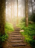 stock photo of step-up  - stairs going up hillside in forest toward sunset - JPG