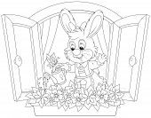 foto of cony  - Little rabbit watering flowers on a windowsill - JPG