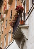Decorative Tree With Red Flowers Is Staying On Balcony In Rome