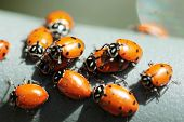 stock photo of water bug  - Beautiful Lady Bugs  - JPG