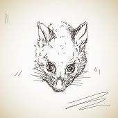 foto of possum  - Vector sketch possum muzzle - JPG