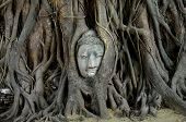 Buddha's Head Is Embeded In Tree Roots, A Beautiful Ancient Site In Ayutthaya As A World Heritage Si