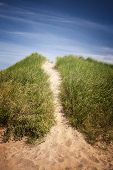 stock photo of dune grass  - Sand path over dunes with beach grass in North Rustico - JPG