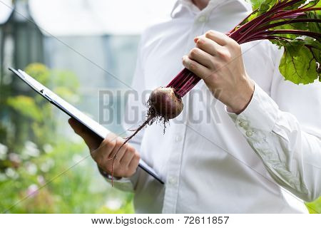Quality Controller Checking Beet Condition