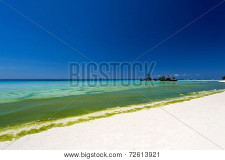Seaweed In Turquoise Sea, Water Plant On Boracay Island