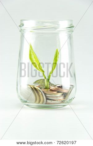 Growing Plant With Coin Money