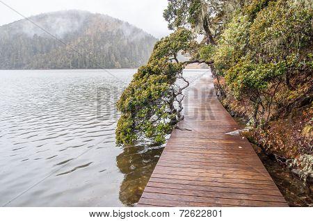 Wooden Walkway In Winter