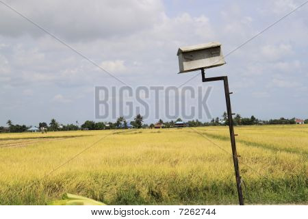 Rice field of Asia