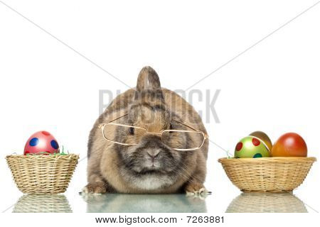 Cute Easter Bunny Sitting Between Baskets With Easter Eggs