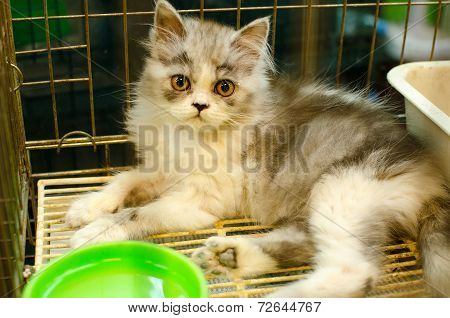 Homeless Animals. Kitten Looking Out From Behind The Bars Of His Cage