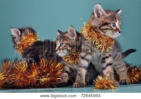 Christmas group portrait of kittens