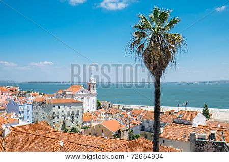 View over Lisbon with a palm tree