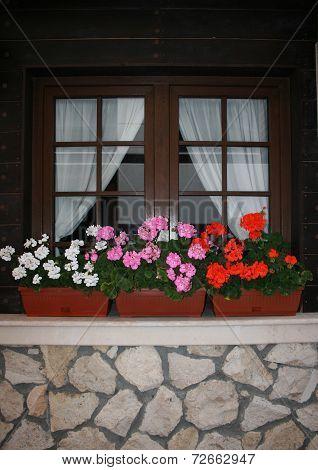 window with flowerpots