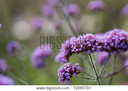 Flowers Meadow Background