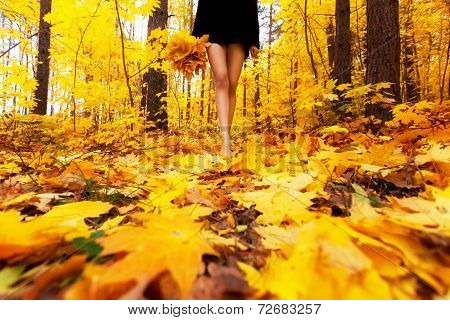 Yellow, Orange And Red Autumn Leaves In Beautiful Fall Park. Girl With Bouquet Of Maple Leaf Goes Th