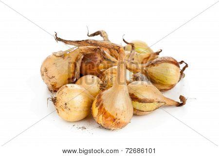 Heap Of Pickling Onions