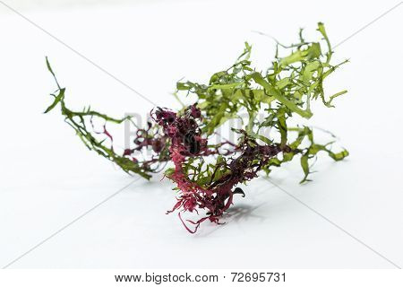 Seaweed Salad Mix