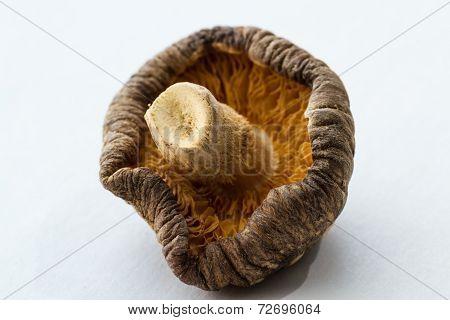 Dehydrated Shiitake Mushroom