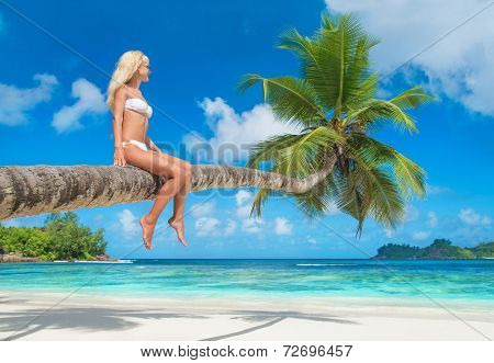 Cute Blonde Woman At Palm Tree, Beach Baie Lazare, Island Mahe, Seychelles