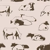 pic of calf cow  - Herd of cows seamless pattern with standing lying relaxing and nipping the grass stylized cows in different poses vector - JPG