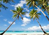 foto of boracay  - Palms on tropical beach Philippines Boracay island