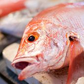 foto of red snapper  - Red snapper on seafood asian market closeup