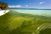 image of boracay  - Seaweed in turquoise sea mire on white beach - JPG