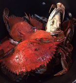 picture of blue crab  - Beautifully boil blue crabs for a nice crab boil - JPG