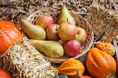 picture of indian apple  - Pumpkins apples pears tomatos and straw on a wooden plate - JPG