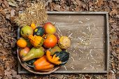 stock photo of indian apple  - Pumpkins apples pears tomatos and straw on a wooden plate - JPG