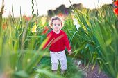 stock photo of gladiolus  - Beautiful baby girl walking in a gladiolus field at sunset - JPG