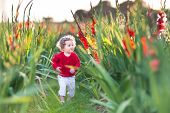 picture of gladiolus  - Cute baby girl playing on a gladiolus farm field on a summer evening - JPG
