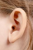 stock photo of sensory perception  - Ear girl close - JPG
