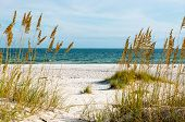 stock photo of sea oats  - A scene on the Gulf Coast of Alabama - JPG